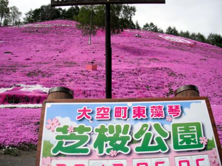 6−5芝桜30.JPG
